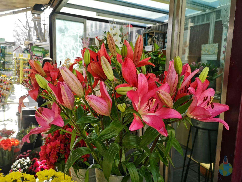La Rambla plimbare centru arta stradala flori cafenele