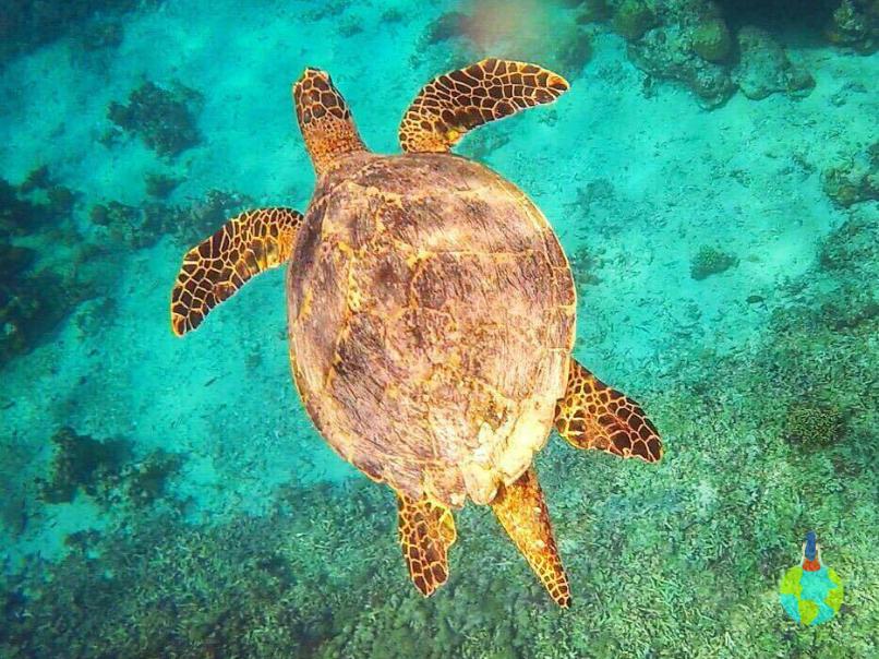 La snorkeling cu țestoasele