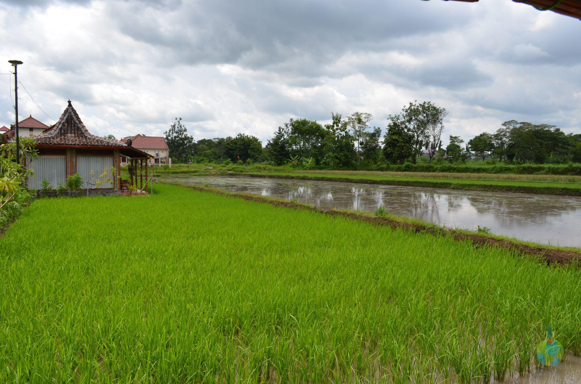 Villa Alamanda, orezarie, Yogyakart