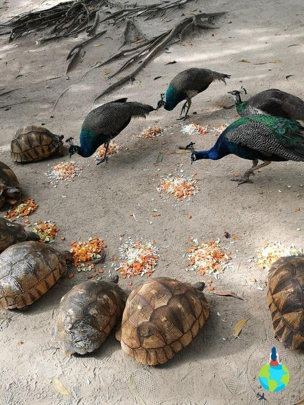 Țestoasele de la Cheetah's Rock