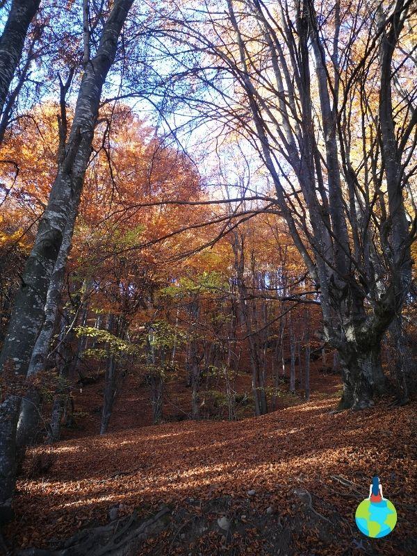 Drumul prin pădure către Statuia lui Iisus