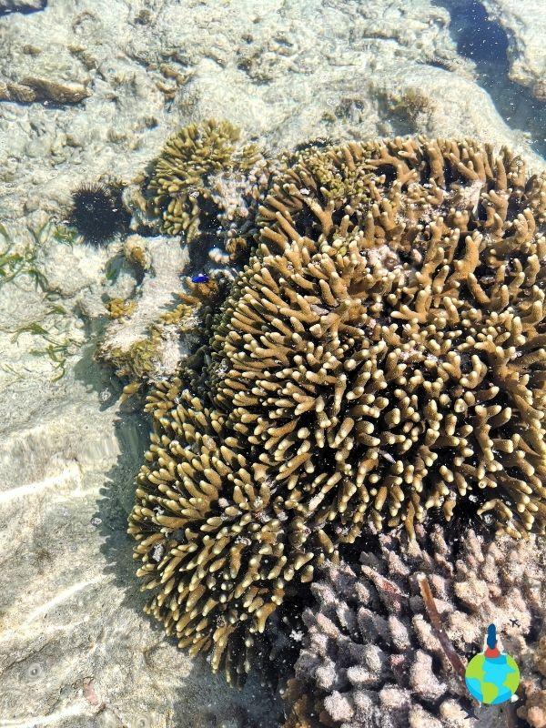Corali - Reciful din Zanzibar