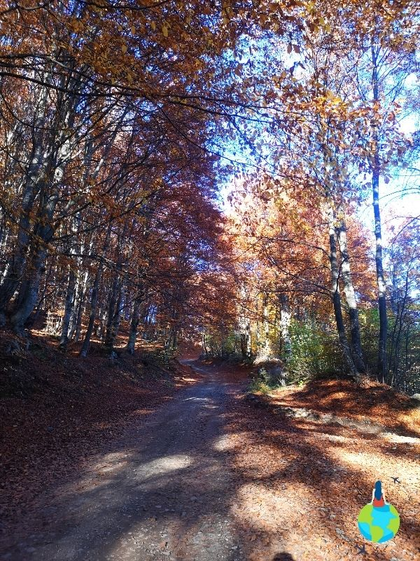 Drumul forestier către Statuie