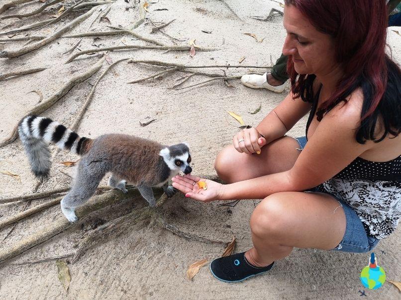 Lemurii - pofticioși