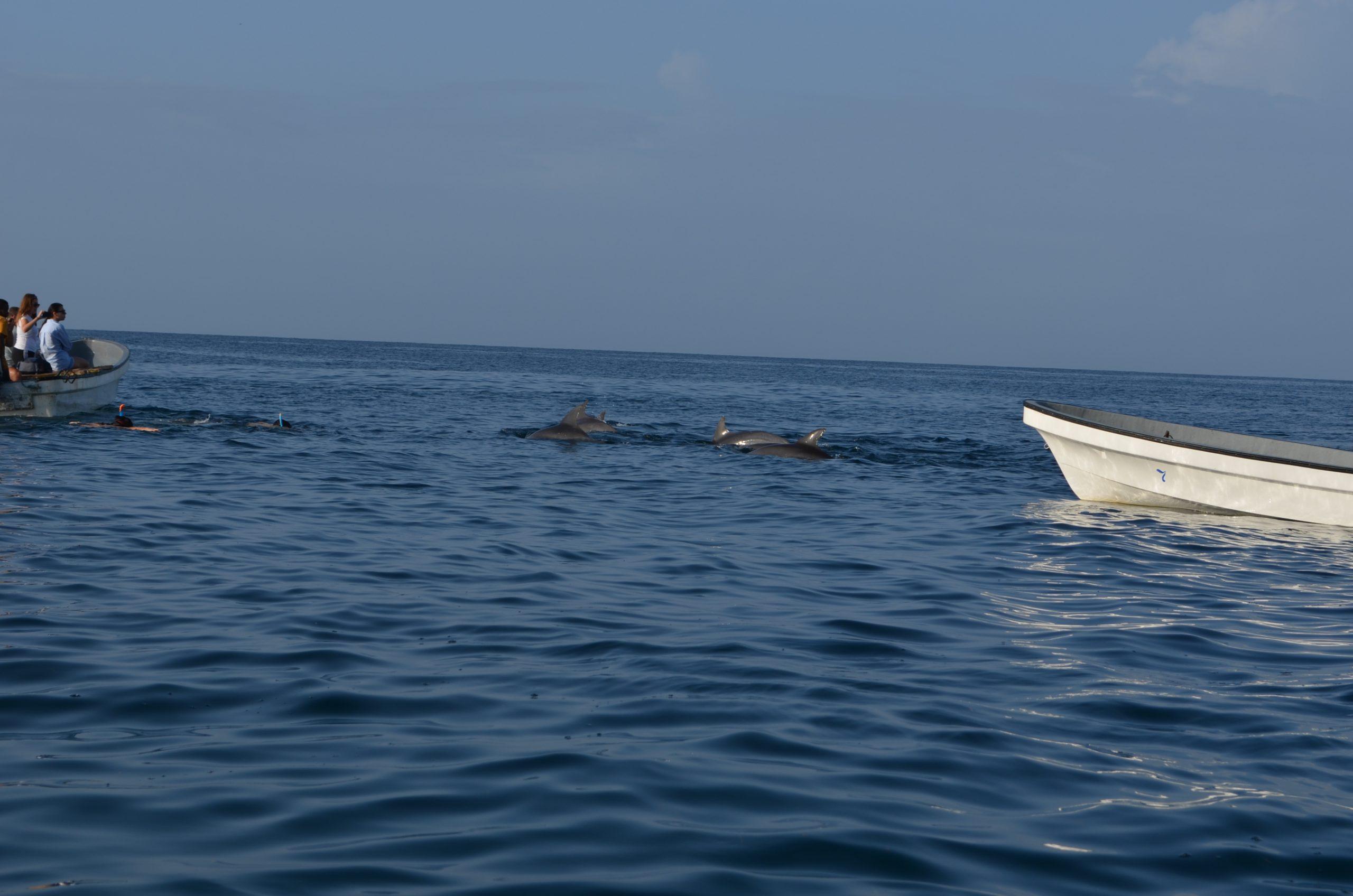 Zanzibar Dolphin Safari