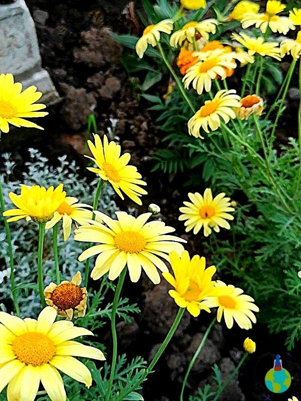 Flori din Casa Fluturilor